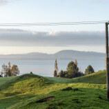 Dairy sheep for Rotorua