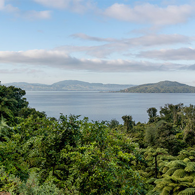 Will Hazelnuts grow in the Lake Rotorua Catchment?