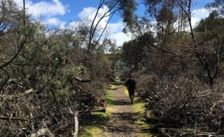 Efforts continued to tackle pesky weed near Mount Tarawera